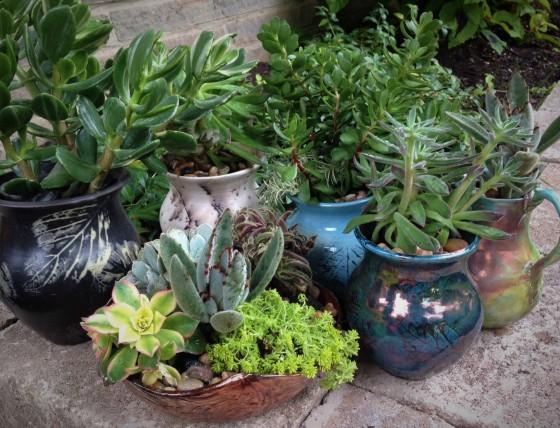 septsucculents