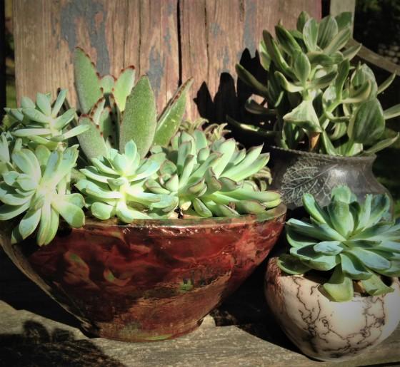 succulentsnew