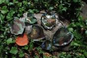 raku leaves 009
